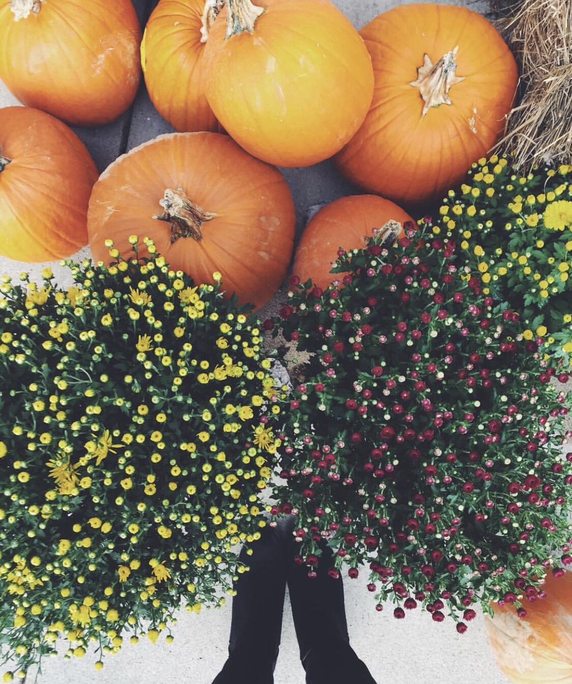 Twenty-five Things to do this Fall! | LexRayn 🌻🍂🍃