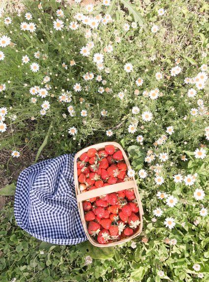 Strawberry Picking, Anyone?
