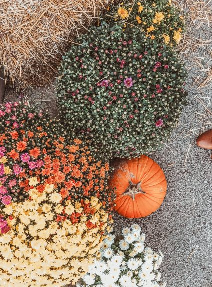 10 Things to do This Fall – COVID Friendly | LexTober